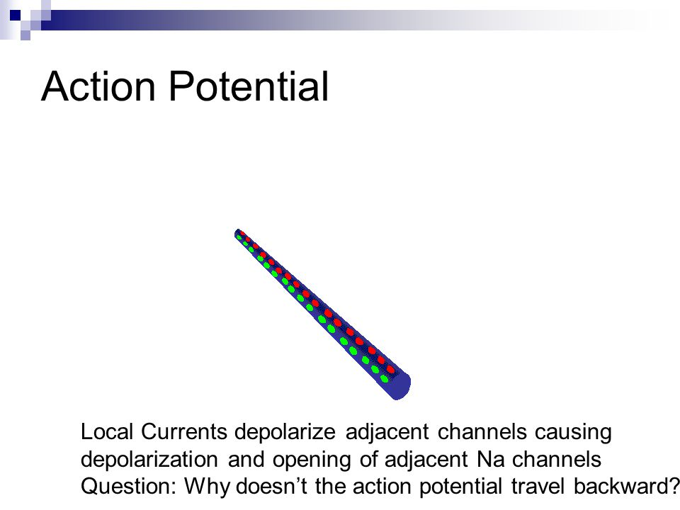 Action Potential Local Currents depolarize adjacent channels causing