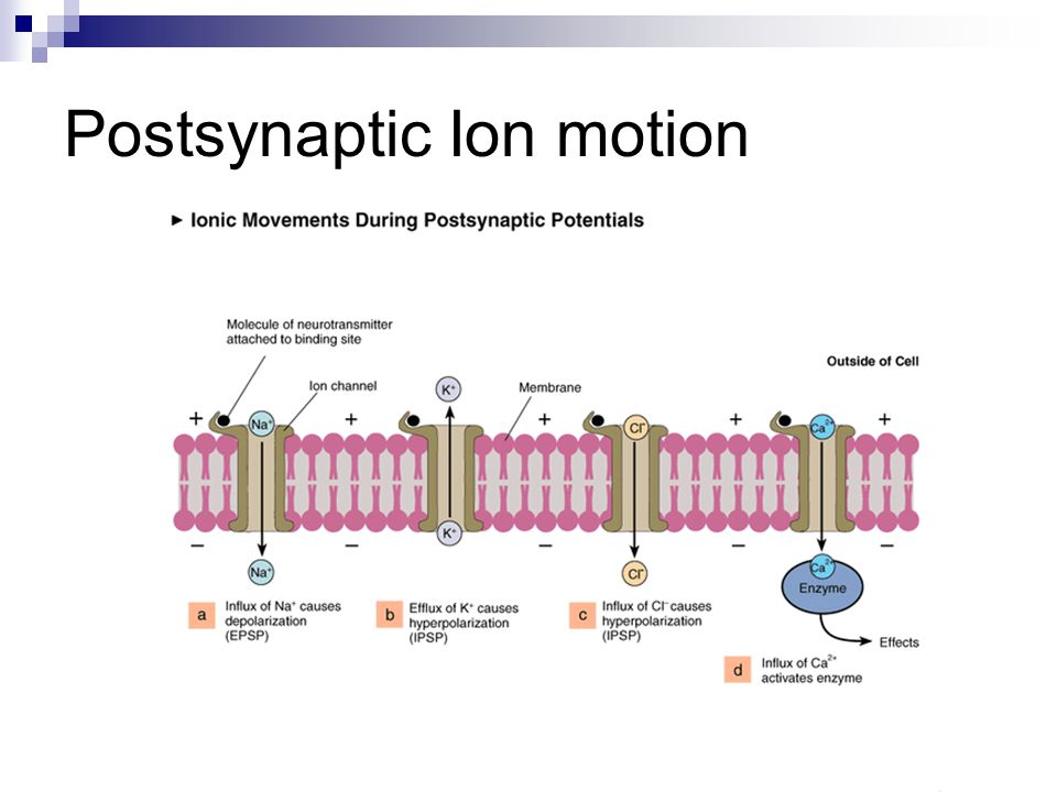 Postsynaptic Ion motion