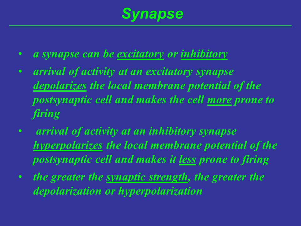 Synapse a synapse can be excitatory or inhibitory