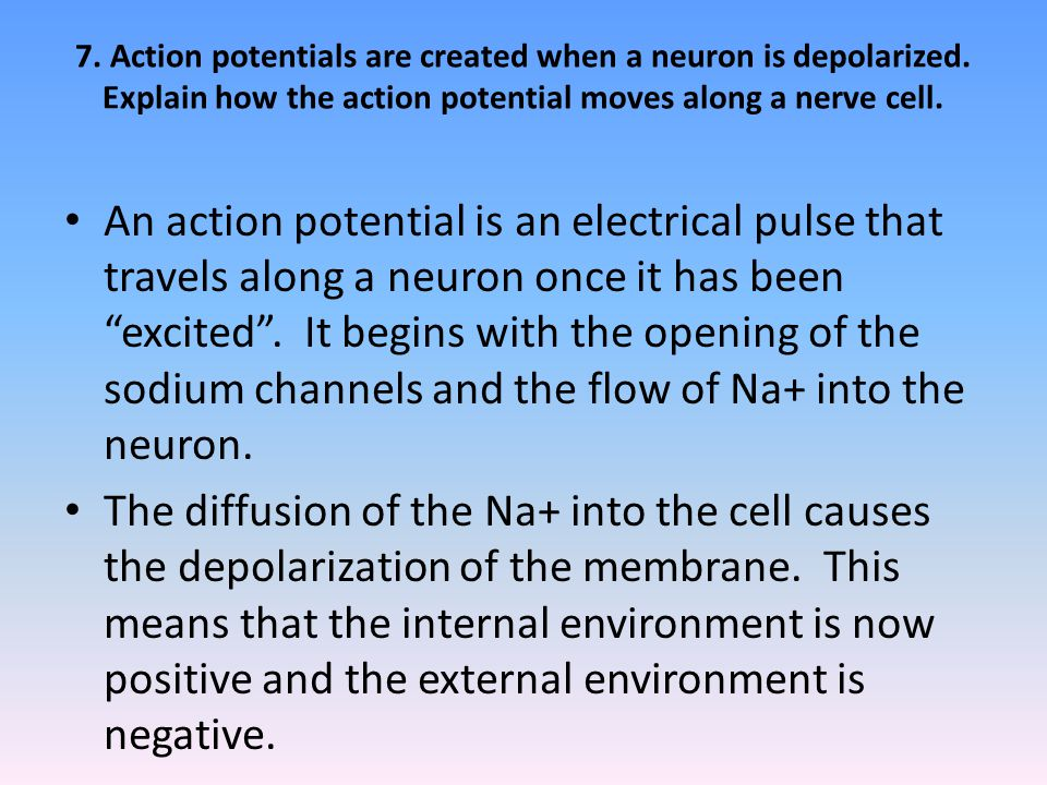 7. Action potentials are created when a neuron is depolarized