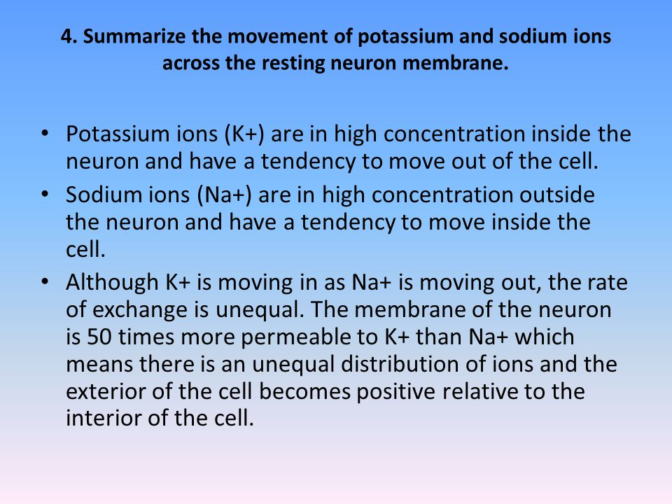 4. Summarize the movement of potassium and sodium ions across the resting neuron membrane.
