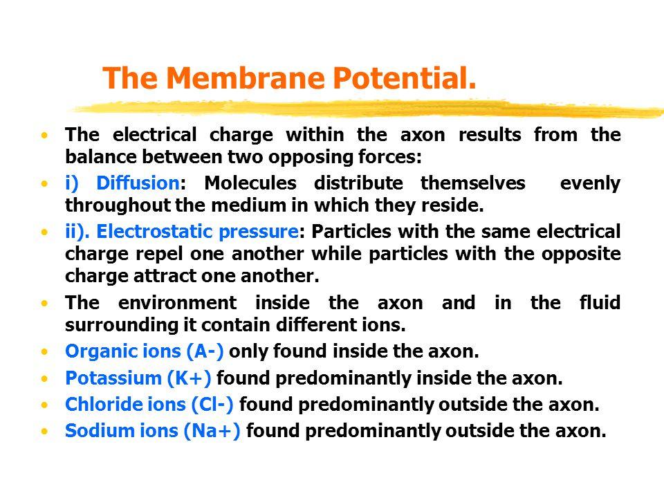 The Membrane Potential.
