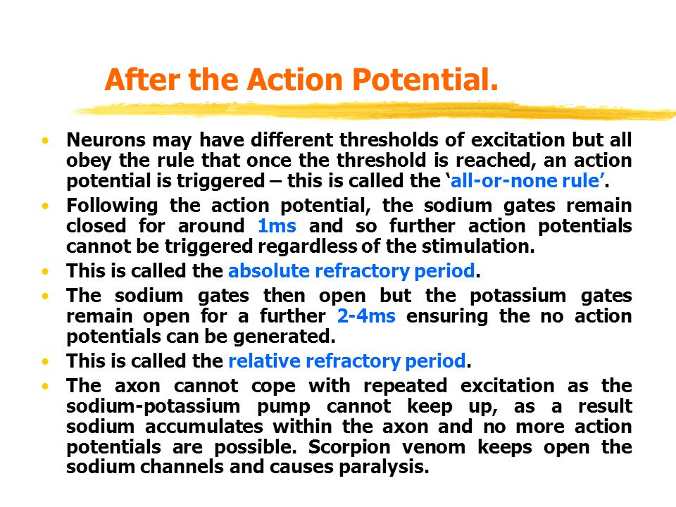 After the Action Potential.