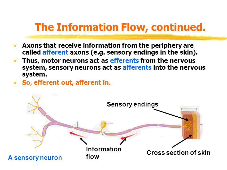 The Information Flow, continued.