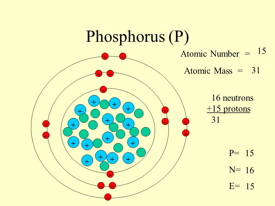 Phosphorus (P) 15 Atomic Number = - - Atomic Mass = 31 - - -