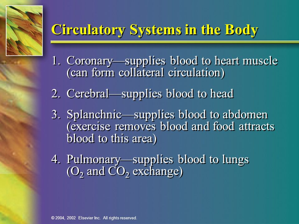 Circulatory Systems in the Body