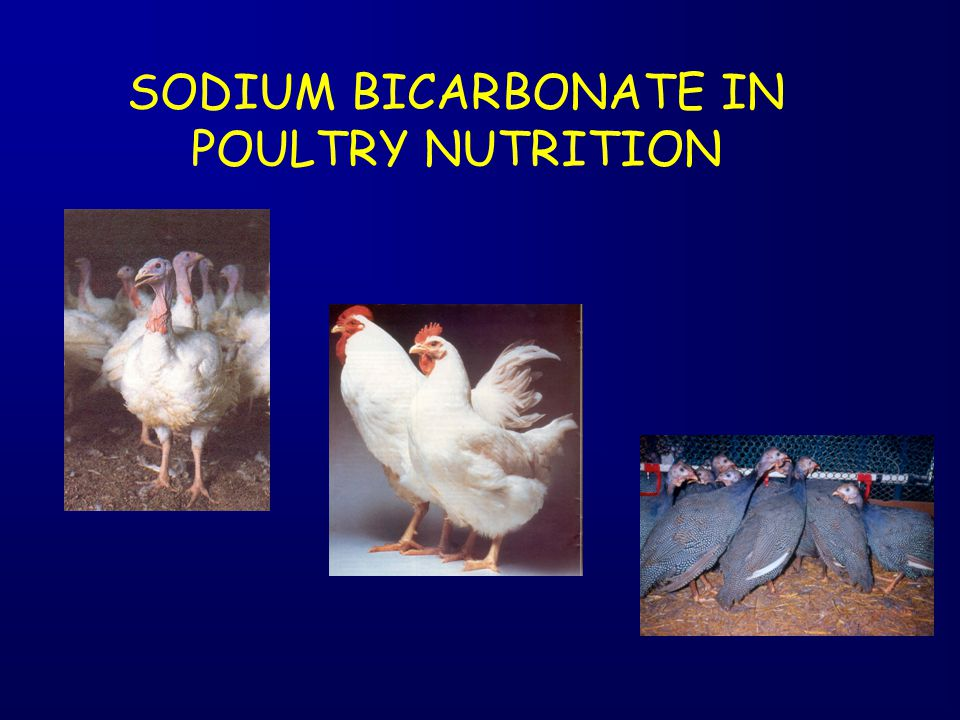 SODIUM BICARBONATE IN POULTRY NUTRITION