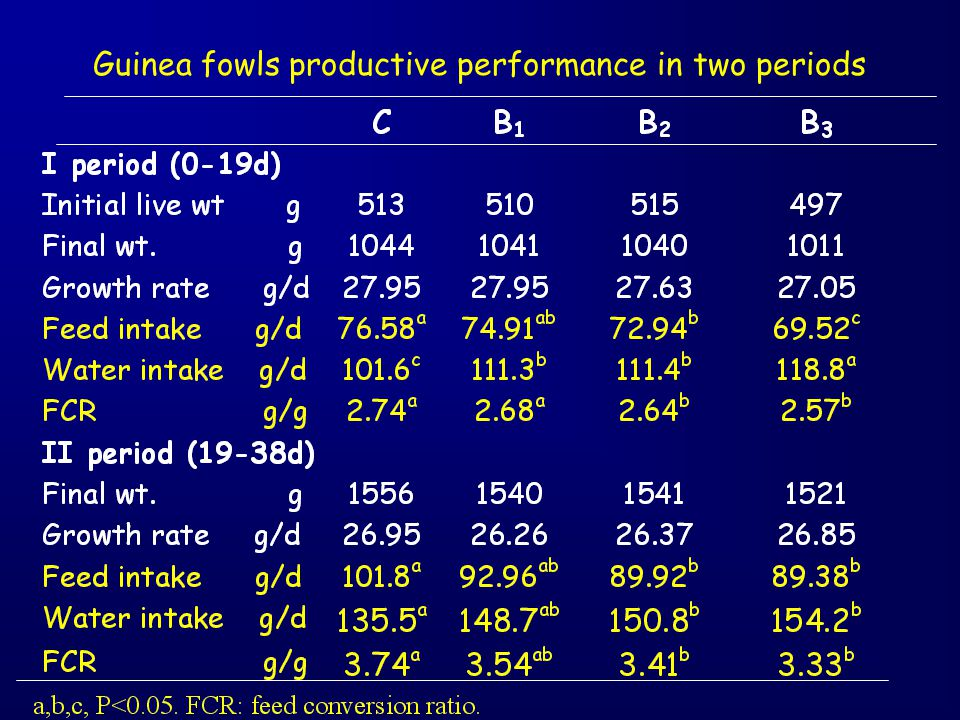 Guinea fowls productive performance in two periods
