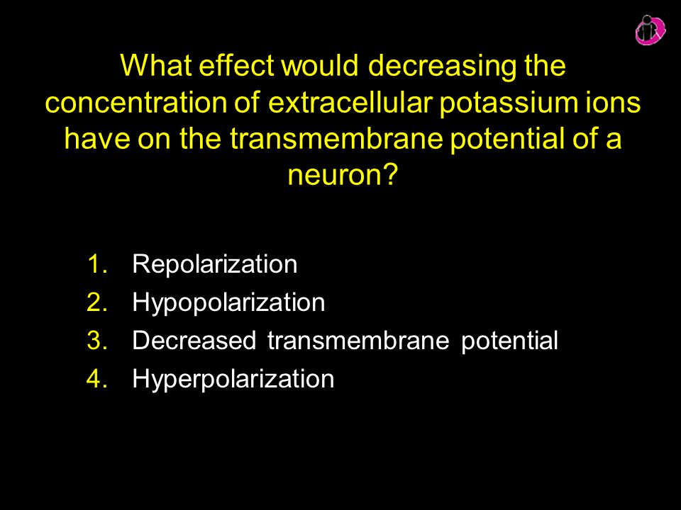 What effect would decreasing the concentration of extracellular potassium ions have on the transmembrane potential of a neuron
