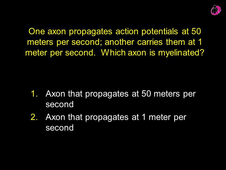 Axon that propagates at 50 meters per second
