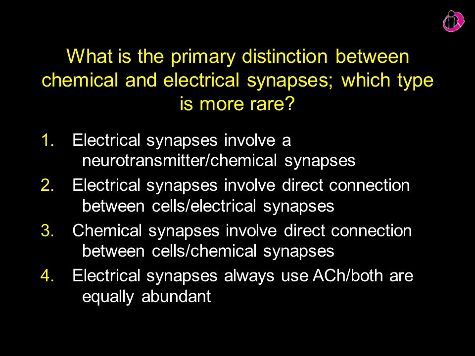 What is the primary distinction between chemical and electrical synapses; which type is more rare