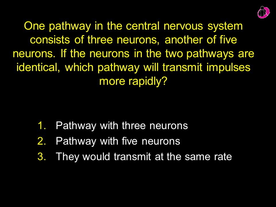 One pathway in the central nervous system consists of three neurons, another of five neurons. If the neurons in the two pathways are identical, which pathway will transmit impulses more rapidly