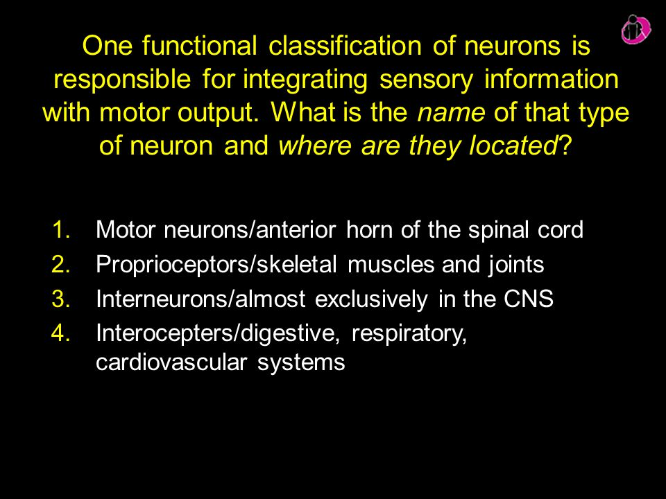 One functional classification of neurons is responsible for integrating sensory information with motor output. What is the name of that type of neuron and where are they located