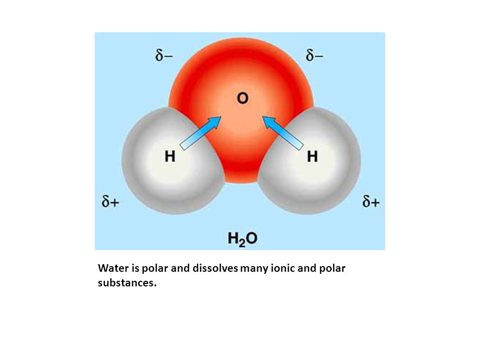Water is polar and dissolves many ionic and polar substances.