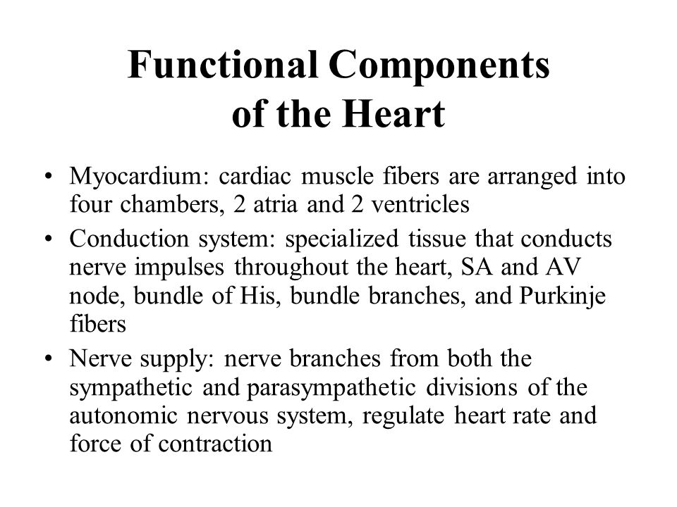 Functional Components of the Heart
