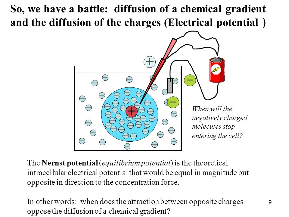 So, we have a battle: diffusion of a chemical gradient and the diffusion of the charges (Electrical potential )