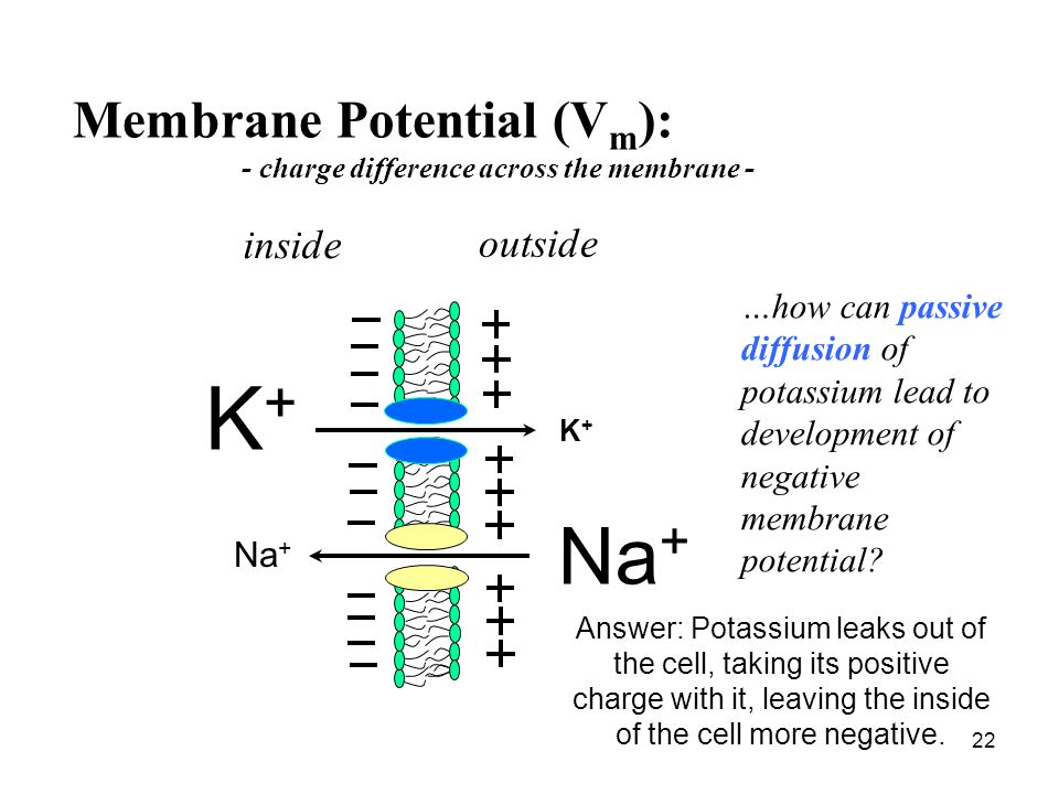 - charge difference across the membrane -