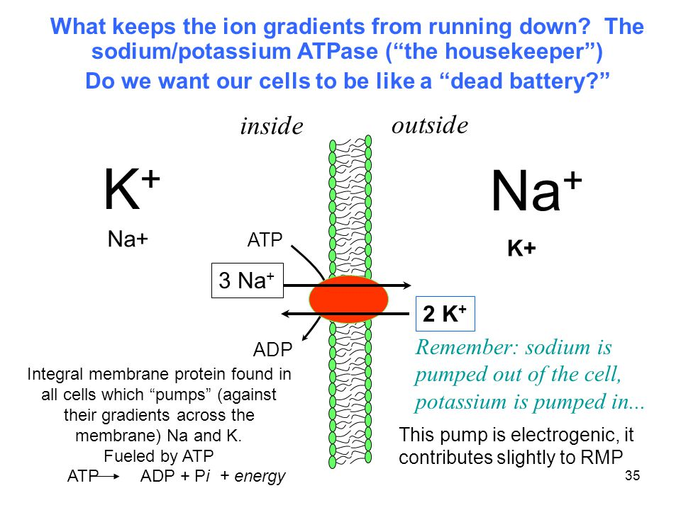 Do we want our cells to be like a dead battery