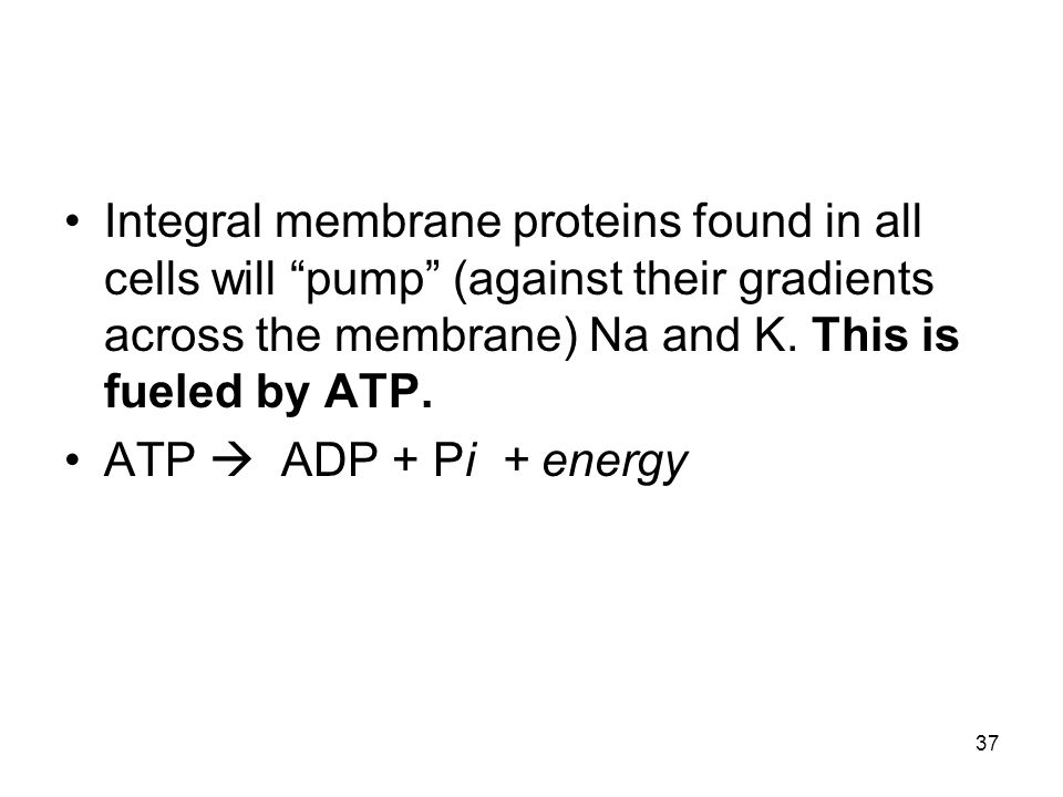 Integral membrane proteins found in all cells will pump (against their gradients across the membrane) Na and K. This is fueled by ATP.