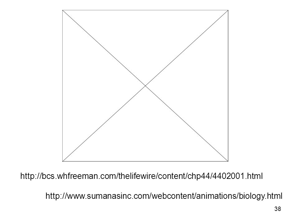 http://bcs.whfreeman.com/thelifewire/content/chp44/4402001.html http://www.sumanasinc.com/webcontent/animations/biology.html.