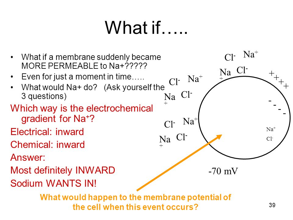 What if….. - + -70 mV. Na+ Cl- What if a membrane suddenly became MORE PERMEABLE to Na+ Even for just a moment in time…..