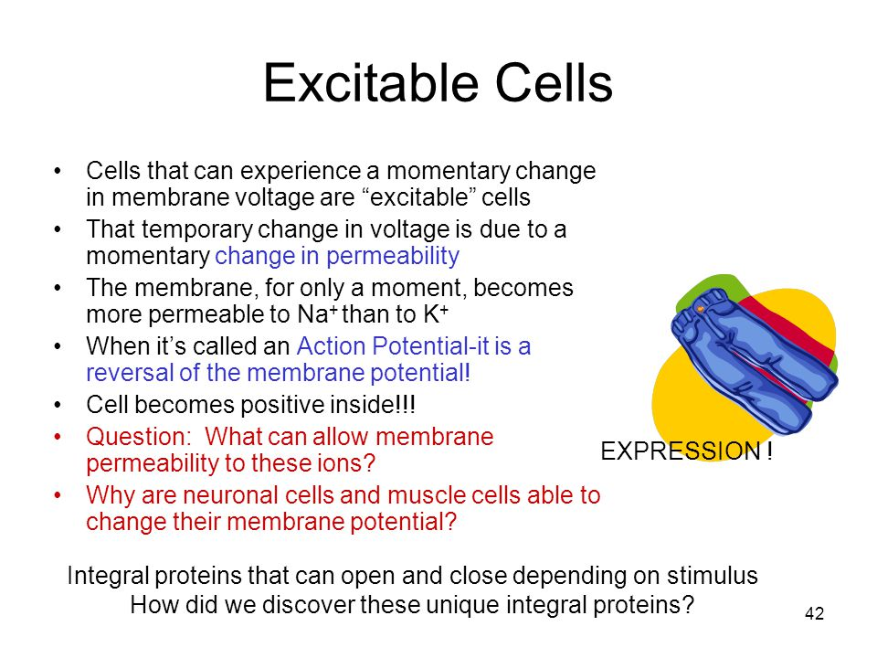 Excitable Cells Cells that can experience a momentary change in membrane voltage are excitable cells.