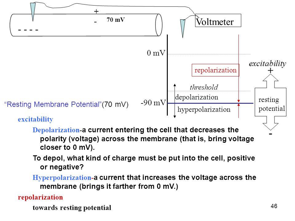 Resting Membrane Potential (70 mV)