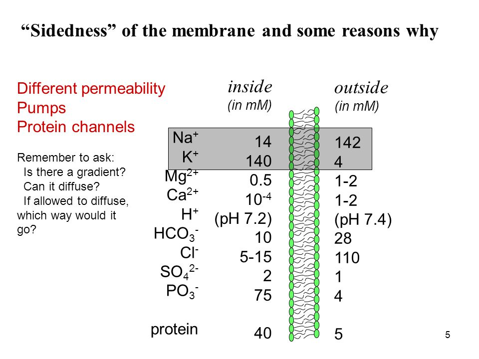 Sidedness of the membrane and some reasons why