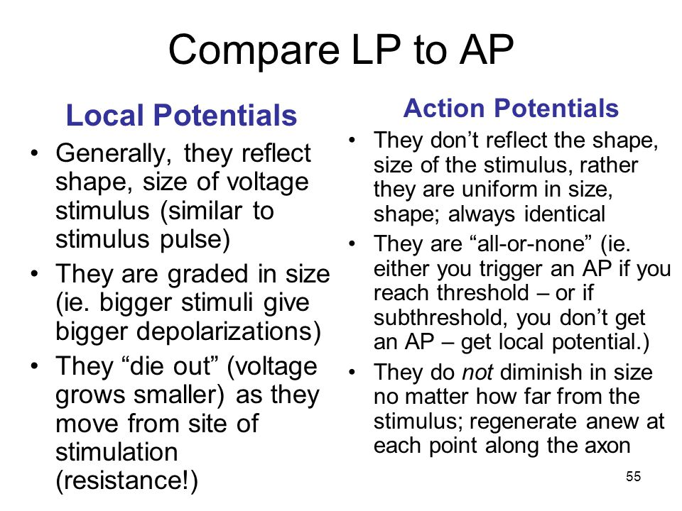 Compare LP to AP Local Potentials Action Potentials