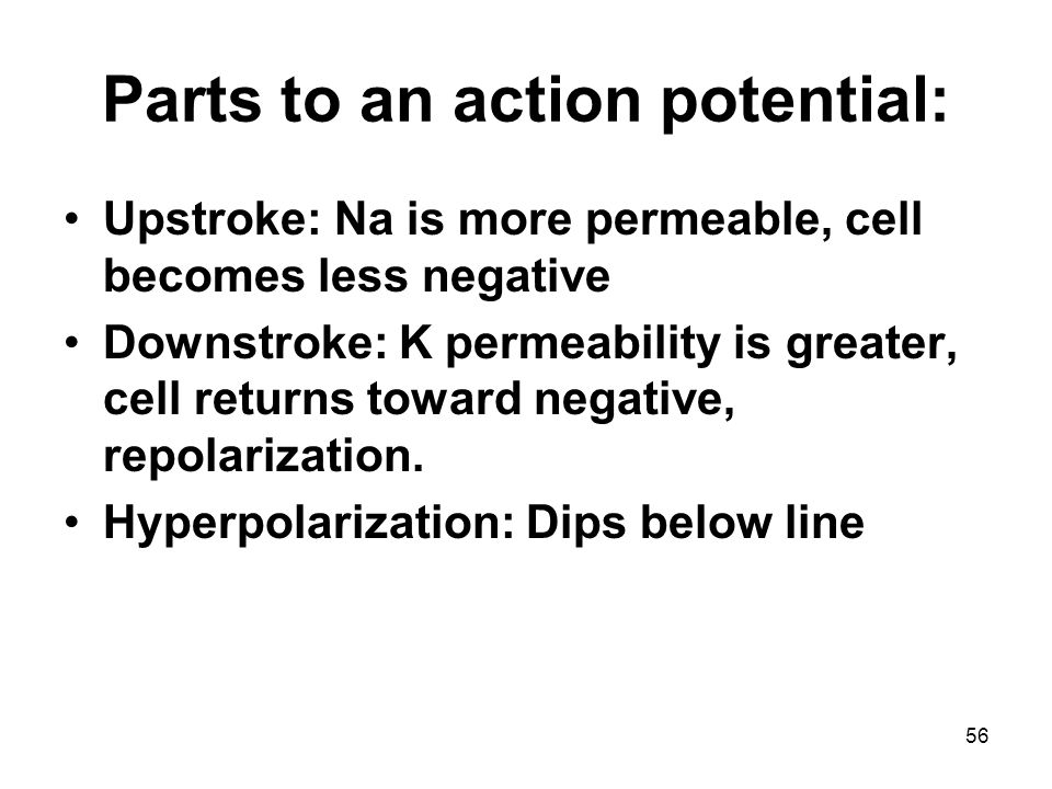 Parts to an action potential: