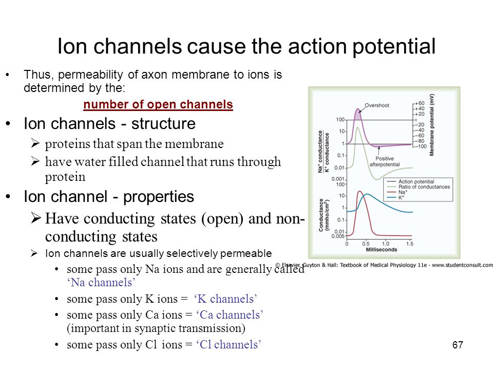 Ion channels cause the action potential