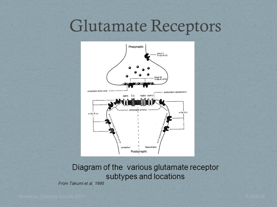 Glutamate Receptors Diagram of the various glutamate receptor subtypes and locations. From Takumi et al, 1998.