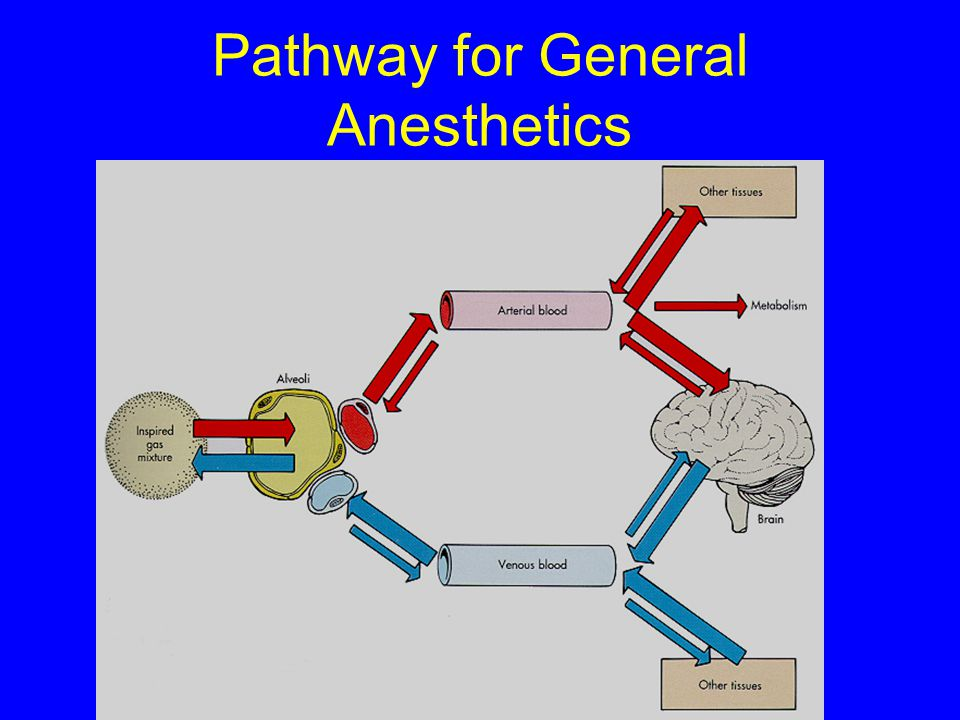 Pathway for General Anesthetics
