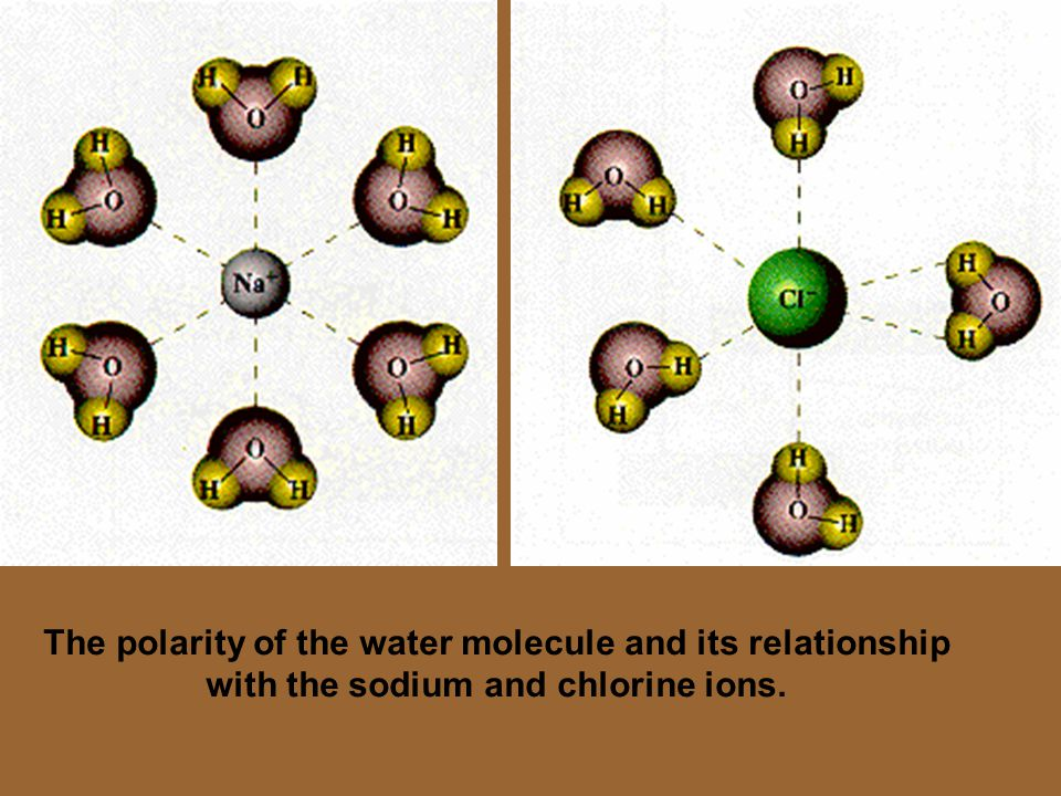 The polarity of the water molecule and its relationship