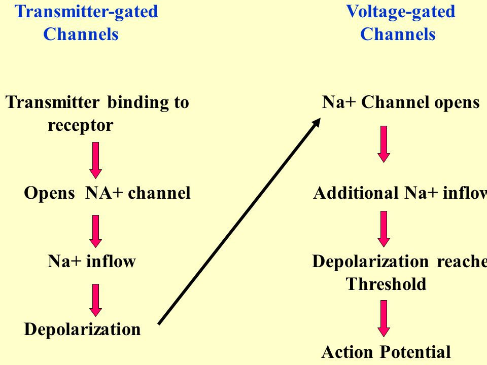 Transmitter-gated Voltage-gated