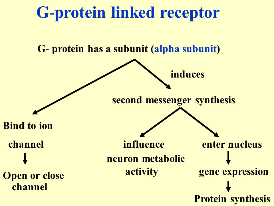 G-protein linked receptor