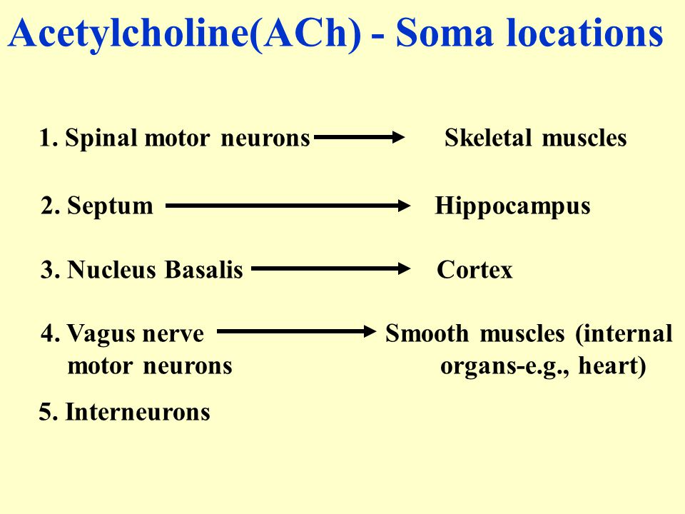 Acetylcholine(ACh) - Soma locations