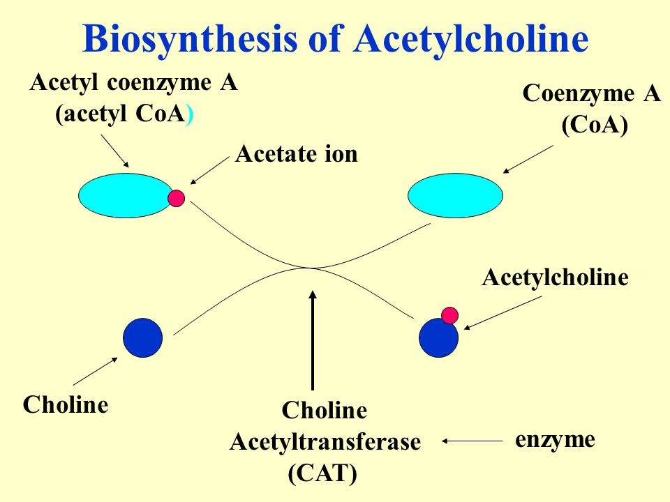 Biosynthesis of Acetylcholine