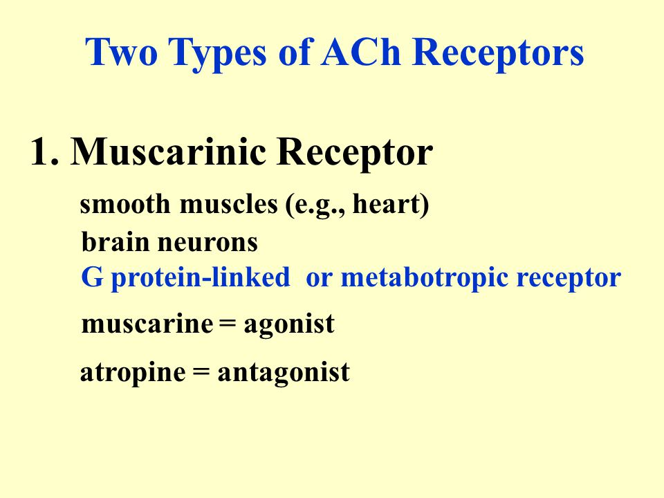 Two Types of ACh Receptors