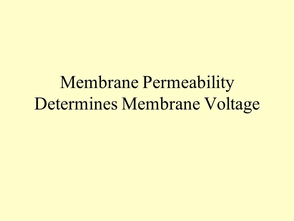 Membrane Permeability Determines Membrane Voltage