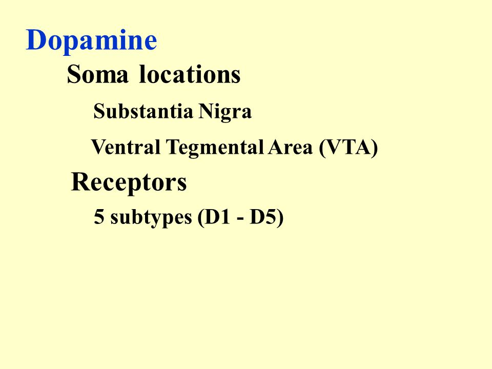 Dopamine Substantia Nigra Receptors Soma locations