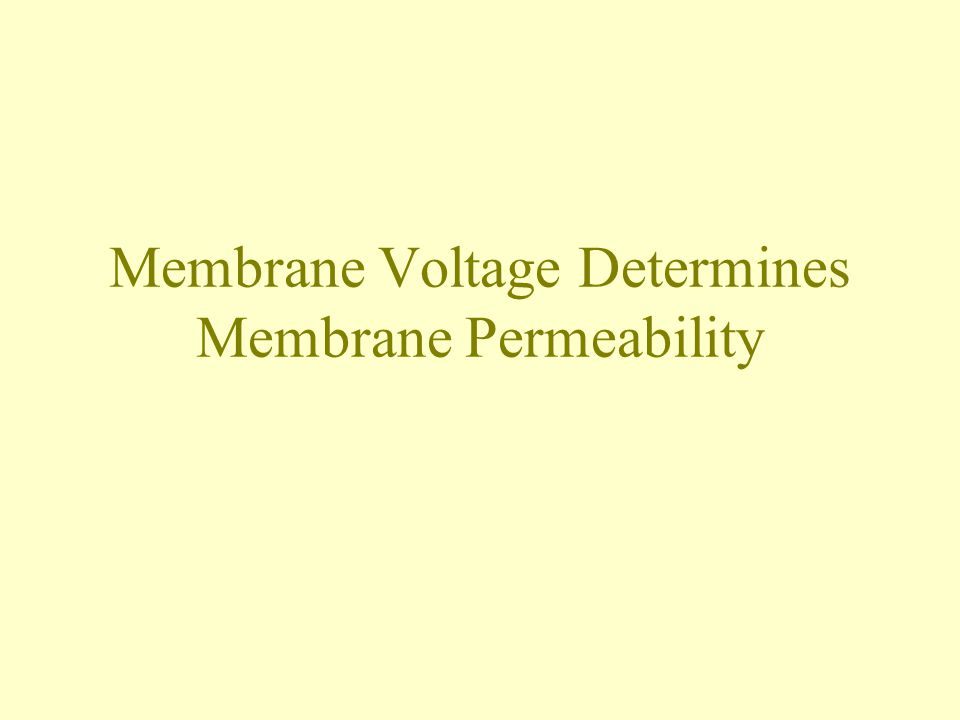 Membrane Voltage Determines Membrane Permeability