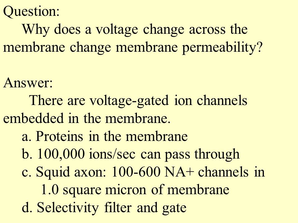 Question: Why does a voltage change across the. membrane change membrane permeability Answer: There are voltage-gated ion channels.
