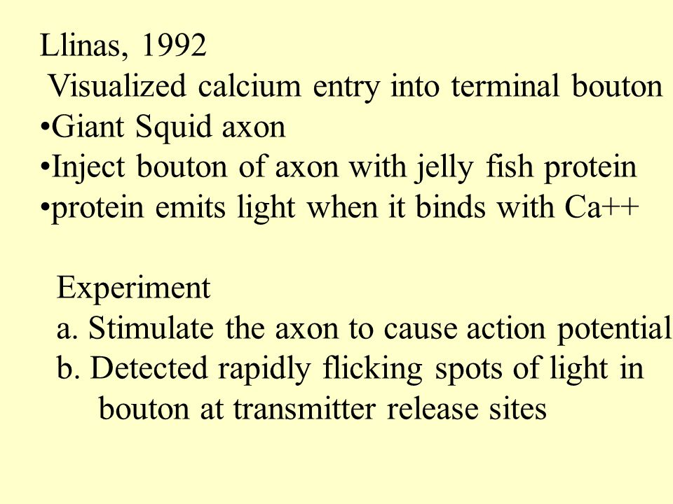 Llinas, 1992 Visualized calcium entry into terminal bouton. Giant Squid axon. Inject bouton of axon with jelly fish protein.