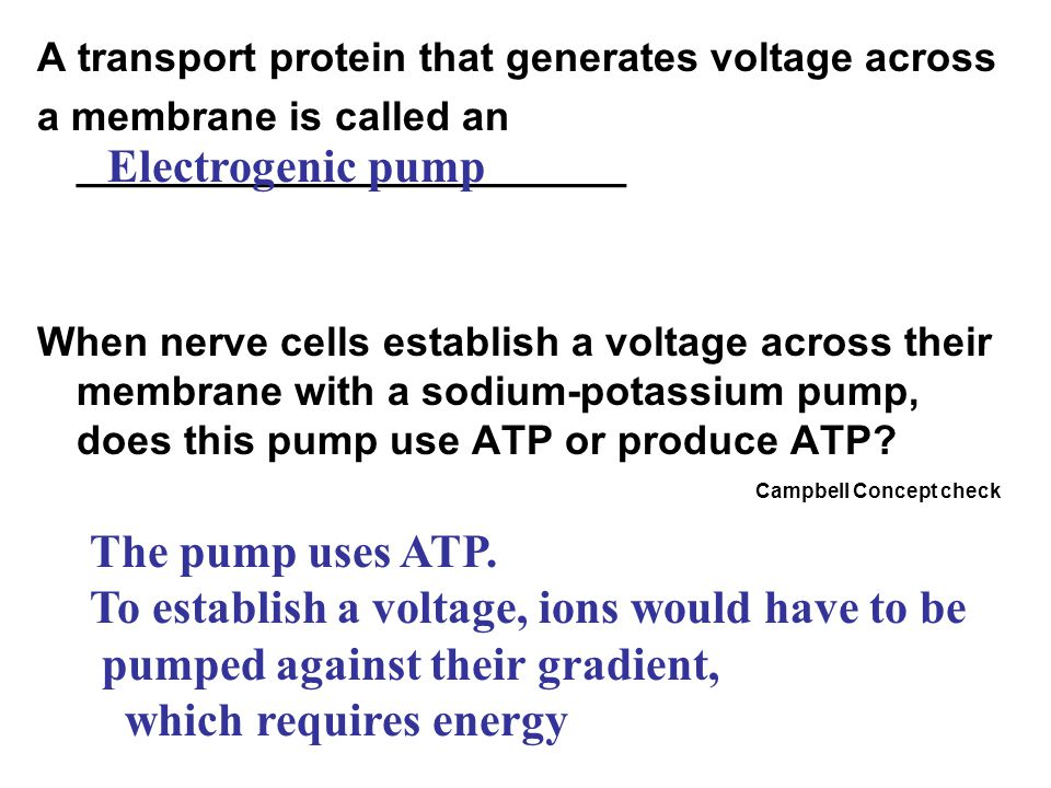 A transport protein that generates voltage across