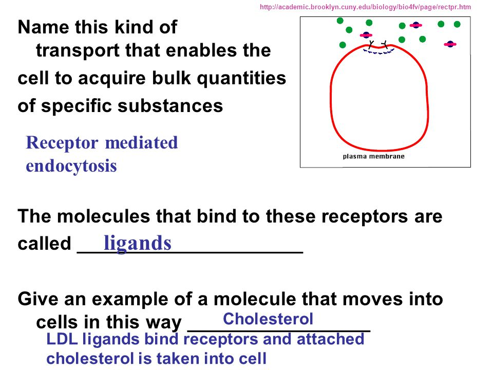 ligands Name this kind of transport that enables the