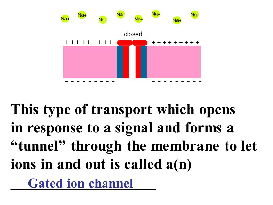 This type of transport which opens in response to a signal and forms a tunnel through the membrane to let ions in and out is called a(n) ___________________