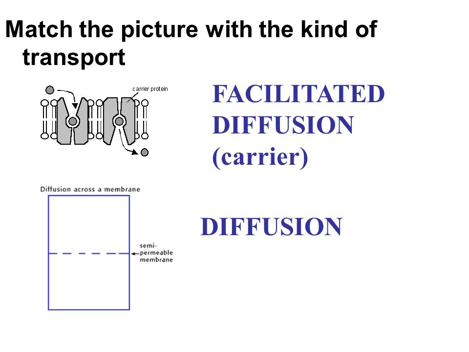 FACILITATED DIFFUSION (carrier)