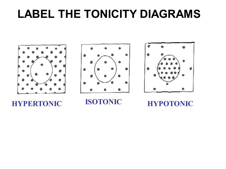 LABEL THE TONICITY DIAGRAMS