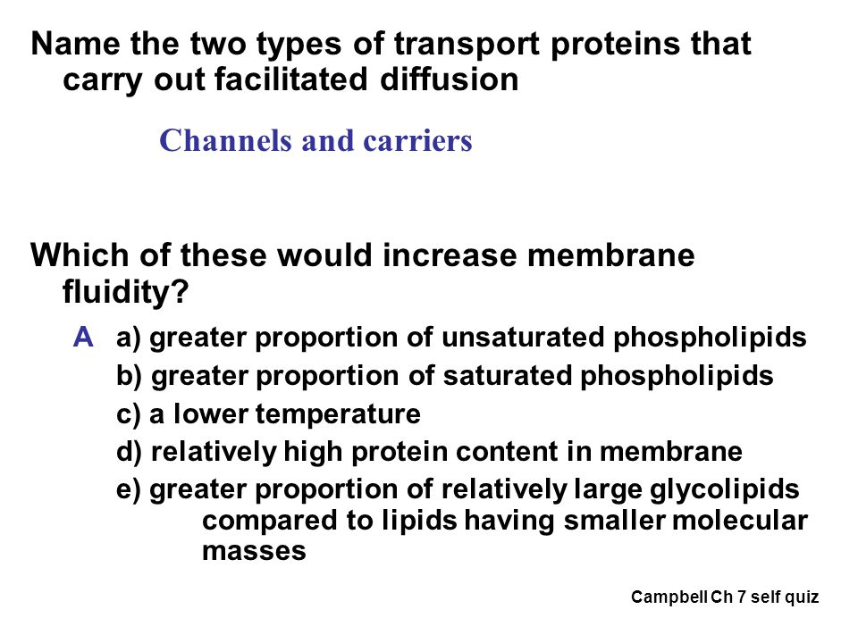 Which of these would increase membrane fluidity